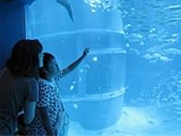 お楽しみ行事の画像です。水族館で大きな水槽と泳ぐ魚を観賞している模様です。