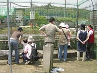 春のイベントの画像です。動物園で動物を観賞しています。
