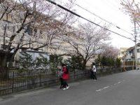 満開の桜とともに♪