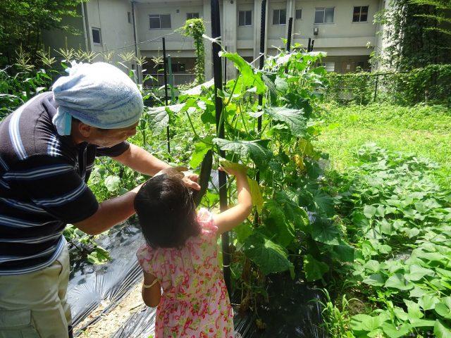 夏野菜!(^^)!