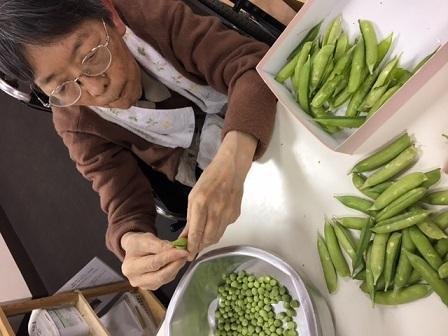 えんどう豆の豆とり