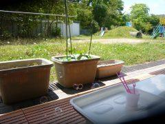 みどり組、菜園始めました♪