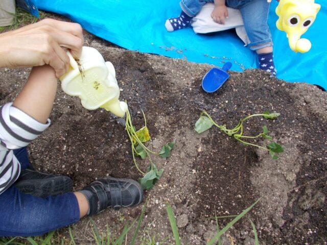 野菜の苗を植えました!(ぴんく組)